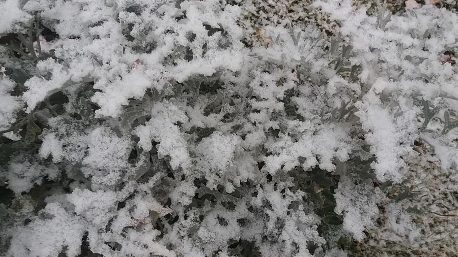 Пао први снег у Тополи