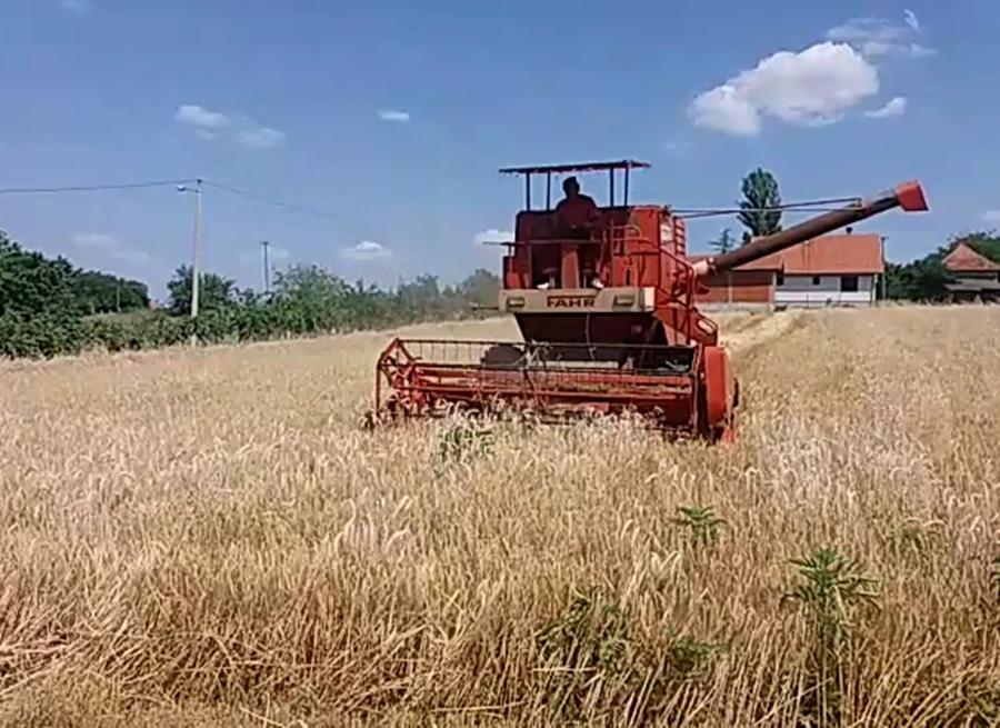 Србија ће имати довољно пшенице: За извоз више од милион тона