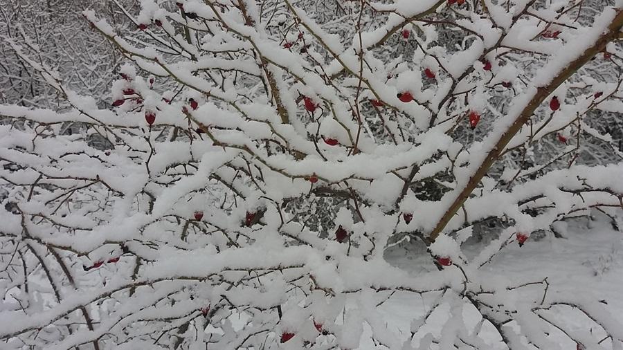 Облачно и хладно, понегде са снегом